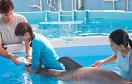 找數字海豚的故事遊戲 / 找數字海豚的故事 Game